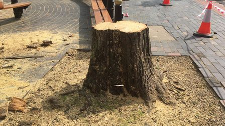 The remains of the tree near St Albans Clock Tower.
