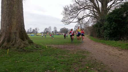St Albans Striders' Paul Adams (905) won gold in the senior men's race at the Herts Cross Country Ch