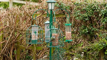 Make sure if you have been feeding the birds that you keep doing so. Picture: Getty