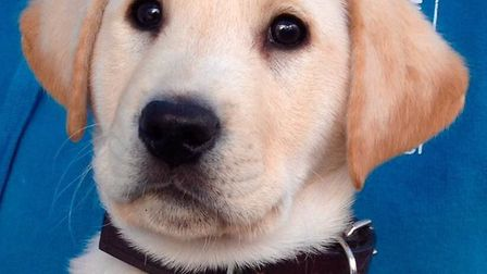 An afternoon tea will be held in Redbourn to raise money for Guide Dogs. Picture: Guide Dogs