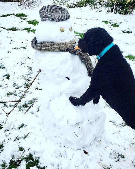 The snow brought a new friend for Barney the Spanish water dog. Picture: Kathryn Mitchell
