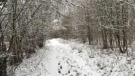 Snow covering a path at the Jersey Farm Woodland Park. Picture: Archant