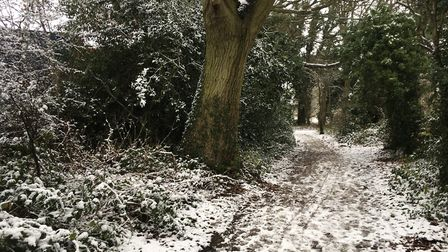 Snow covering a woodland path near Jersey Farm. Picture: Archant