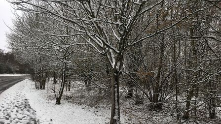 It looked very wintery, with trees balancing snow along the edge of the Jersey Farm Woodland Park. w
