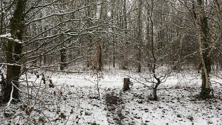 There was a thick covering of snow at the Jersey Farm Woodland Park. Picture: Archant