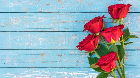 Romantic bunch of red rose flowers on blue wood background with copy space
