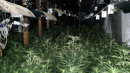 Around 2,200 plants and growing equipment were seized from the cannabis factory at Warboys Airfield.