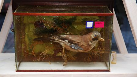 Taxidermy animals for sale in the Cancer Research shop in St Albans. Picture: DANNY LOO
