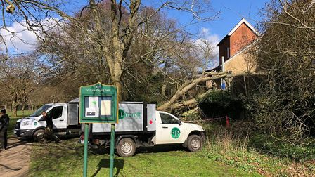 The fallen tree in Victoria Playing Fields, which hit Muriel Green Nursery School in St Albans. Pict