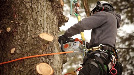 The RHS no longer recommend binding, wrapping or painting pruning cuts. Picture: iStock/PA