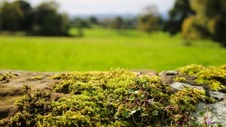 You may not particularly like moss, but it's probably hurting your aesthetic more than your vegetati