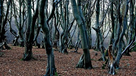 Winter time in Bricket Wood. Picture: Archant