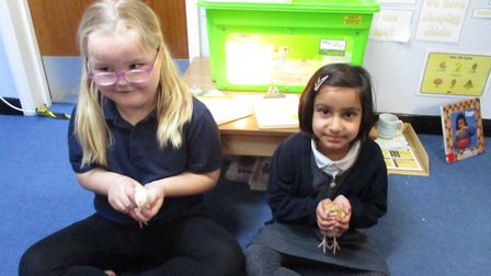 Chicks have hatched at Hartford Infants School. Picture: CONTRIBUTED