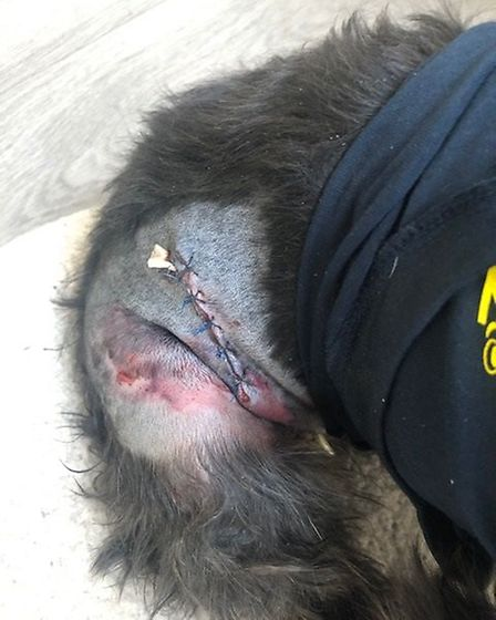 Jasmine's injuries after the incident. Picture: Emma McNamee