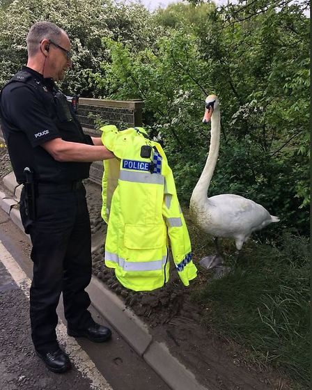 Officers helped the BCH Road Policing team rescue the swan
