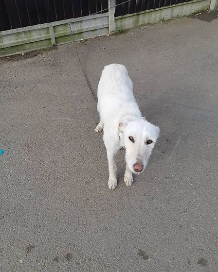 The dog that was found during the raid