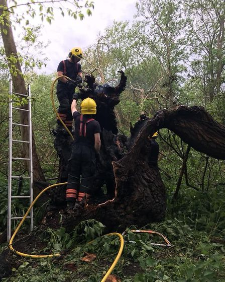 Arsonists set fire to a row of willow trees in Hartford. Picture: CFRS