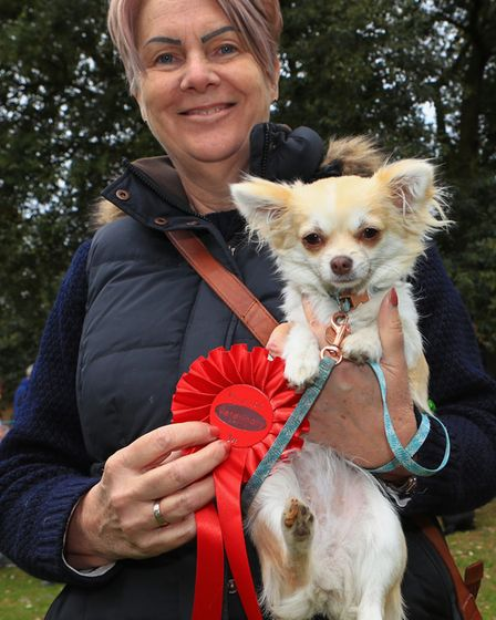 Nine month old Chihuahua Phoebe, first place winner of Prettiest Female in the dog competition at th