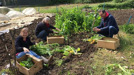 FoodSmiles St Albans gardeners picking spinach at FoodSmiles Open Day event. Picture: Submitted by S