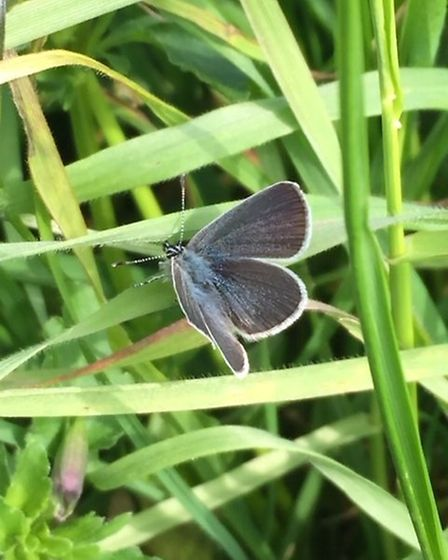 Herts and Middlesex Butterfly Conservation constructed a chalk pit in Chiswell Green to protect smal