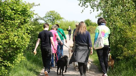 Dog walkers take part in a walk in Heartwood Forest with The Business Community partner Sue Wybrow (