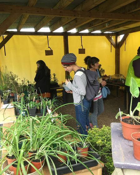 Earthworks Open Day and plant sale. Picture: Submitted by Sustainable St Albans