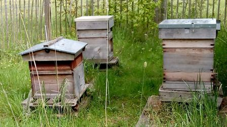 Bee hives at Sandridge Parish Council Bees and Trees event. Picture: Submitted by Sustainable St Alb