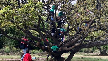 Climbing trees with the Woodcraft Folk. Picture: Submitted by Sustainable St Albans