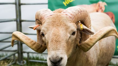 There were animal competitions at Hertfordshire County Show. Picture: Richard Washbrooke