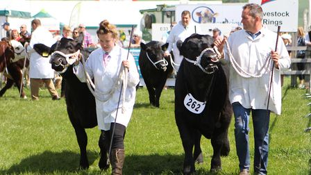 Herts County Show 2019 - Display of Cattle and Livestock.Picture: Karyn Haddon
