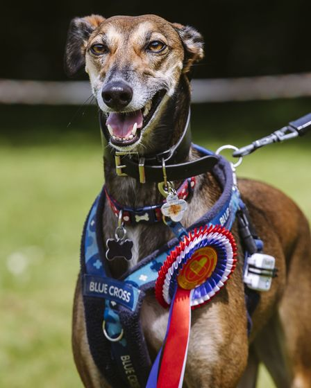 Blue Cross Kimpton Hertfordshire - Open Day and Dog Show. Tori the ex-Blue Cross rescue wins best in