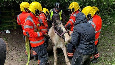 The foal was rescued from a field near Parsons Green. Picture: CFRS