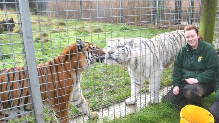 Rosa King at Hamerton Zoo. Picture: ARCHANT