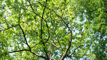 A tree: Picture: stock