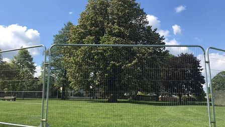 The town council have now put fencing around the tree