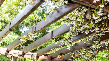 If it's your patio area which you particularly want to screen, consider putting up a pergola, which