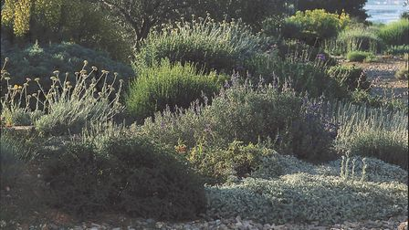Dry-climate plants have adapted to soil conditions that may look harsh but which suit them perfectly