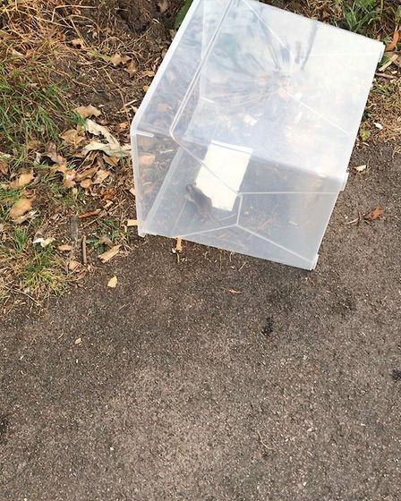 Bye bye Bobby: The mouse was released into nearby woodland. Picture: Richard Burton