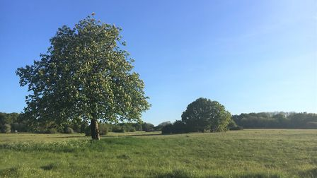 Harpenden Common has once again been awarded a Green Flag Award. Picture: HTC
