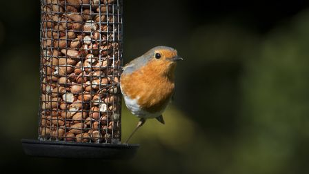 Letting your child fill up your regular bird feeder should engage them, especially when they see bir