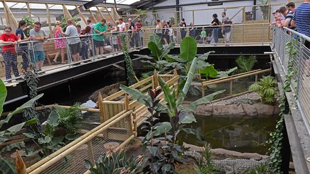 The opening of the new reptiles house at Johnson's of Old Hurst. Picture: ARCHANT