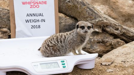 Zoo Watch: Last years weigh-in at ZSL Whipsnade Zoo