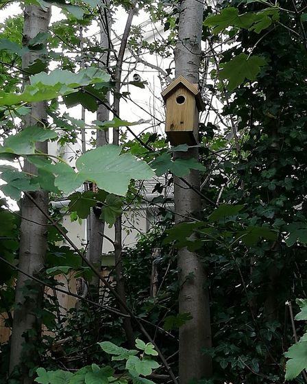 Govia Thameslink Railway staff fitted bird boxes and bug hotels to trees on the embankment at Roysto