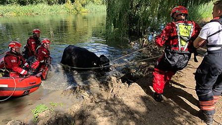 Crews were called to fine a cow stuck in the water in Offord D'Arcy