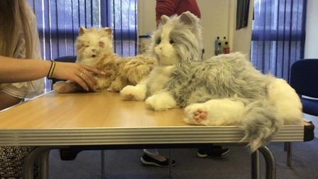 The cats are part of a suite of technologies that Cambridgeshire County Council is using to improve