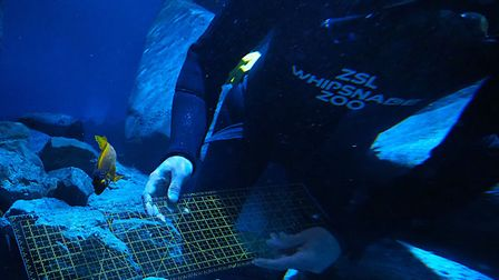 Fish being weighed in the aquarium at ZSL Whipsnade Zoo. Picture: Tony Margiocchi
