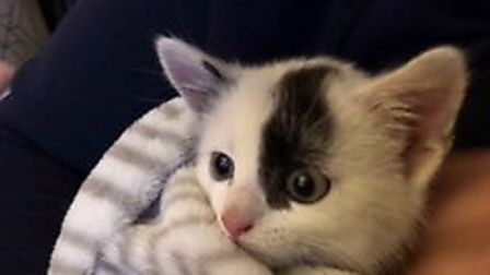 The kitten was rescued after wedging himself in a car engine bay. Picture: CONTRIBUTED