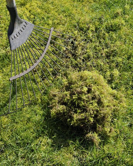 Now is also the ideal time of year to rake through the lawn to get rid of any moss. Picture: Getty I