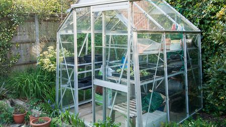 Autumn is a good time to give your greenhouse a bit of TLC. Picture: Getty Images/iStockphoto
