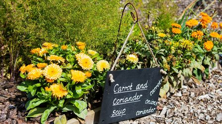 A vegetable plot growing the ingredients for carrot and coriander soup. Picture: RHS/PA